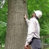 Tree-inspection